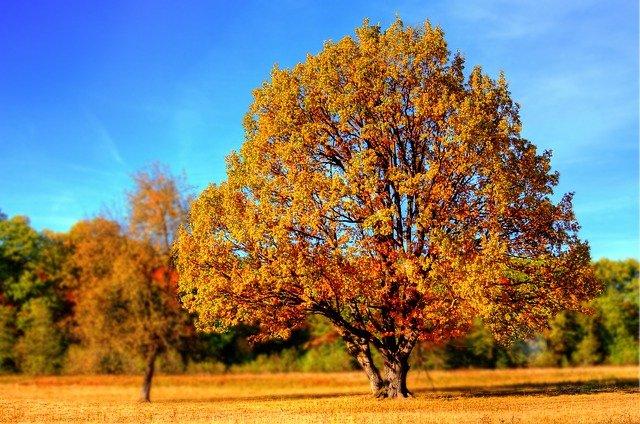 Die Herbstzeit lädt zum Herunterkommen ein – nutzen Sie die Energie der Übergangsphase, um den Blick nach innen zu richten. Das Personality Check Tool hilft Ihnen dabei!